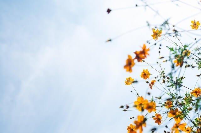 uitvaart-regelen-zon-bloemen-genieten